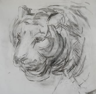 Drawing of the head of a tiger